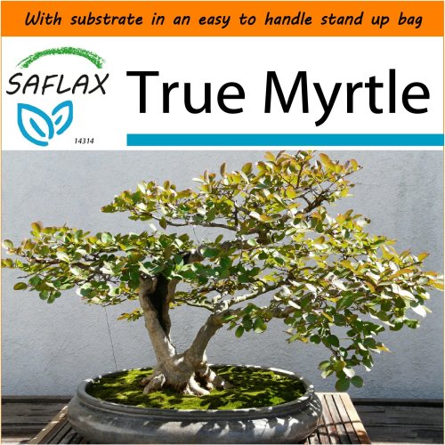 SAFLAX Garden in the Bag - Bonsai - True Myrtle - Myrtus - 30 seeds