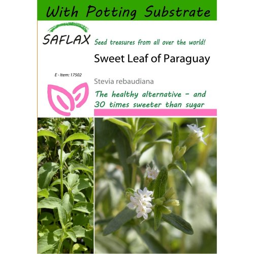Saflax  - Sweet Leaf of Paraguay - Stevia Rebaudiana - 100 Seeds - with Potting Substrate for Better Cultivation