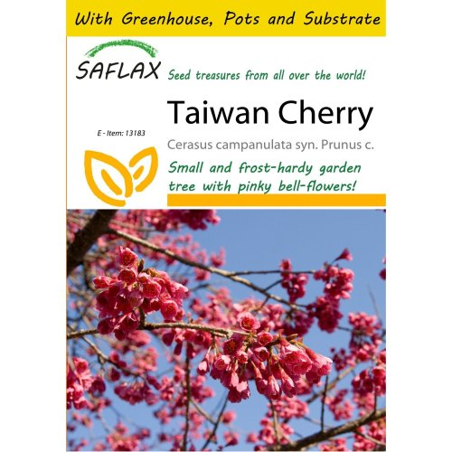 Saflax Potting Set - Taiwan Cherry - Cerasus Campanulata Syn. Prunus C. - 10 Seeds - with Mini Greenhouse, Potting Substrate and 2 Pots