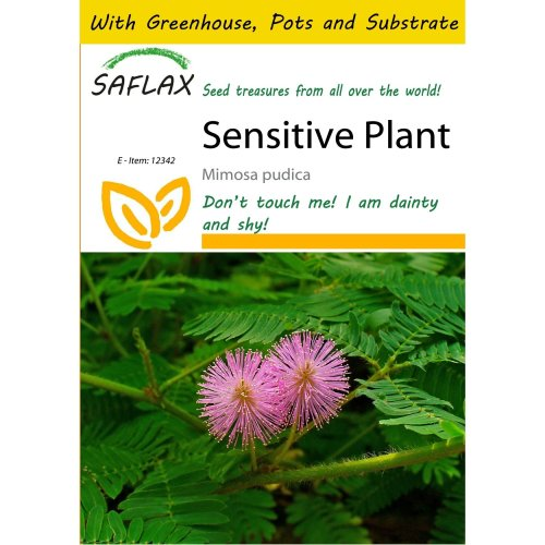 Saflax Potting Set - Sensitive Plant - Mimosa Pudica - 70 Seeds - with Mini Greenhouse, Potting Substrate and 2 Pots