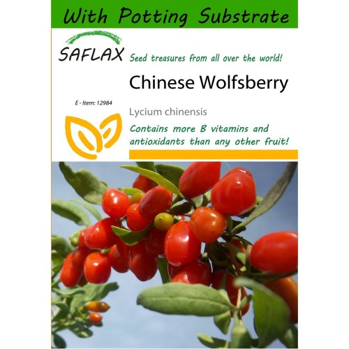 Saflax  - Chinese Wolfsberry - Lycium Chinensis - 200 Seeds - with Potting Substrate for Better Cultivation