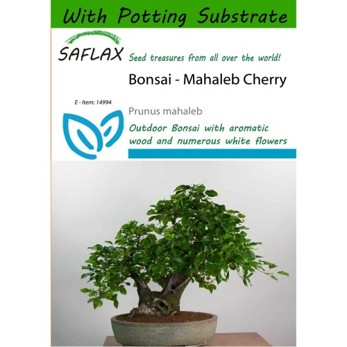 Saflax  - Bonsai - Mahaleb Cherry - Prunus Mahaleb - 30 Seeds - with Potting Substrate for Better Cultivation