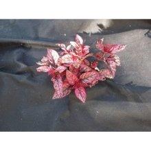 Yuzet® Weed Control Fabric | 1m Wide Ground Cover