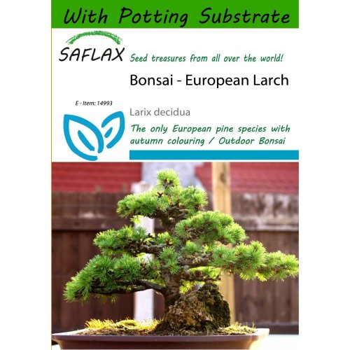 Saflax  - Bonsai - European Larch - Larix Decidua - 75 Seeds - with Potting Substrate for Better Cultivation