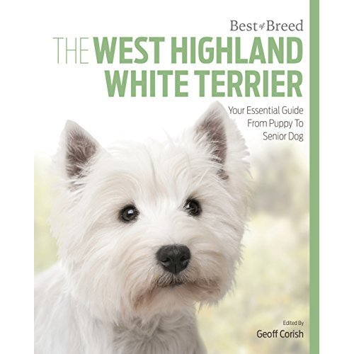 West Highland White Terrier: Best of Breed
