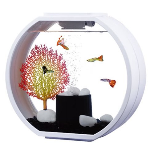 Fish R Fun Deco O Mini 10L Fish Tank | White Aquarium