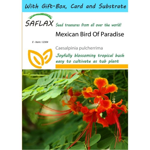 Saflax Gift Set - Mexican Bird of Paradise - Caesalpinia Pulcherrima - 10 Seeds - with Gift Box, Card, Label and Potting Substrate
