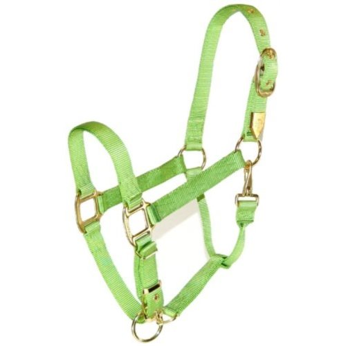 Hamilton 1-Inch Nylon Halter with Adjustable Chin, Lime Green, Small Size 500 to 800-Pound