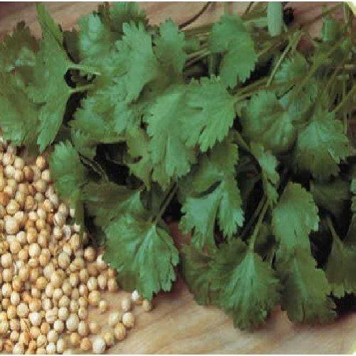 Organic Herb - Coriander - Cilantro - 50g