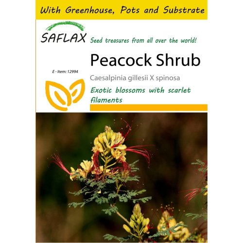 Saflax Potting Set - Peacock Shrub - Caesalpinia Gillesii X Spinosa - 10 Seeds - with Mini Greenhouse, Potting Substrate and 2 Pots