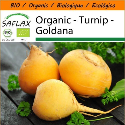 SAFLAX Garden in the Bag - Organic - Turnip - Goldana - 500 certified organic seeds  - Brassica