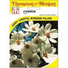Thompson & Morgan - Flowers - Cosmos Purity - 100 Seed